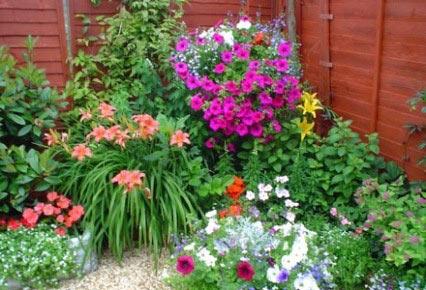 plantas-para-jardin