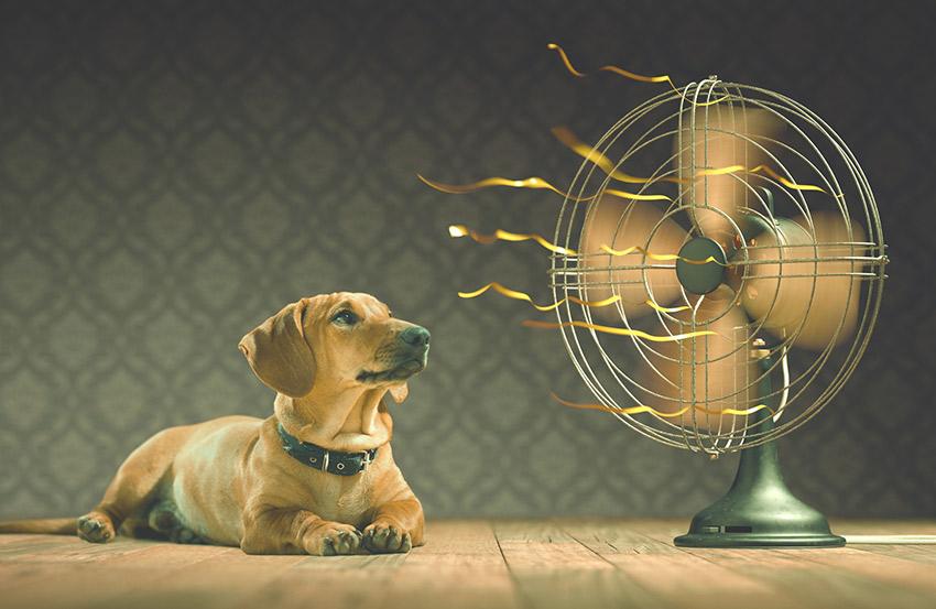 Consejos para comabtir el calor
